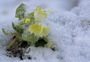 Kommt ein Gruß vom Winter
