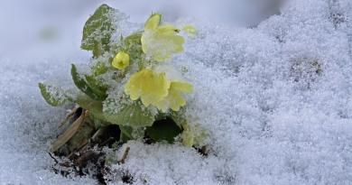 Donnerstag noch 17°, Freitag Schnee